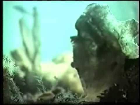 затылочного научно популярные фильмы про размножение ограниченной ответственностью