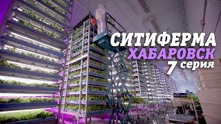 СИТИФЕРМА | Хабаровск | 7 серия #240