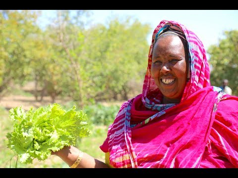 Somali AgriFood Fund: Strengthening Communities Through Investment
