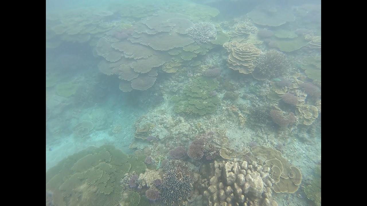 20190629澎湖藍色珊瑚礁忘憂島一日遊東嶼坪浮潛 - YouTube