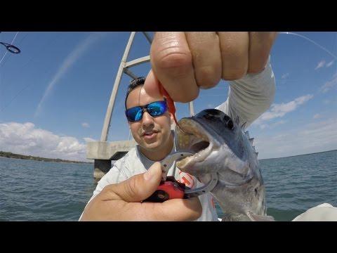 Inshore Saltwater Fishing Snook & Sheephead