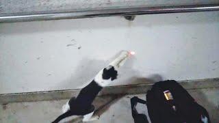 家の近くで野良子猫を見つけた 2019年4月25日(木) thumbnail