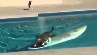 Сообразительные котики   смешные видео про умных кошек