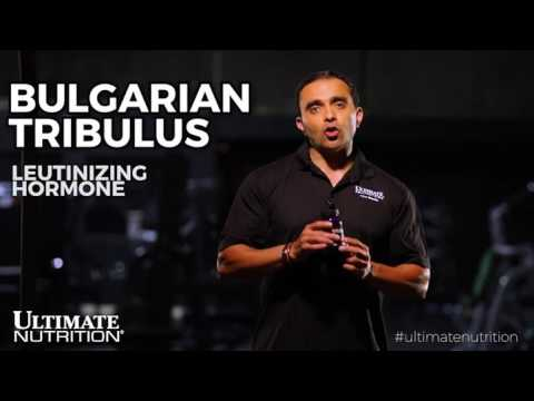 BULGARIAN TRIBULUS - YouTube