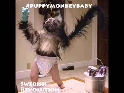 Puppy Monkey Baby SONG (SuperBowl Mountain Dew Kickstart) Swedish Revolution Free Dwlnd @MountainDew