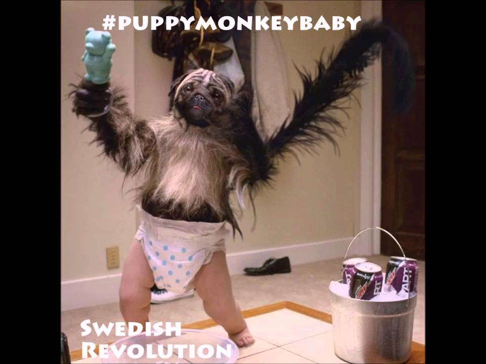 Puppy Monkey Baby Song Superbowl Mountain Dew Kickstart