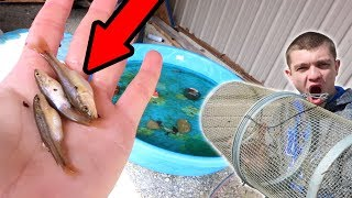 Minnow Trapping for the Pool Pond!