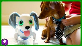 We Got NEW PUPPIES! Flappy is Jealous. Playtime with HobbyKidsTV