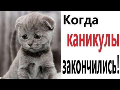 Лютые приколы  КОГДА КАНИКУЛЫ ЗАКОНЧИЛИСЬ!!! Самое смешное видео! РЖАКА ДО СЛЁЗ!  – Domi Show