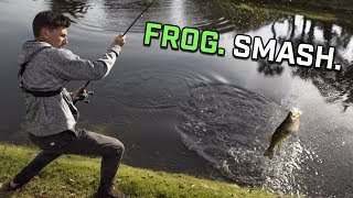 They Were CRUSHING This Frog! | ft. APBassing