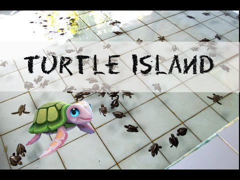 The Turtle Conservation and Education Center in Bali | Serangan | Turtle Island