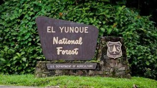 El Yunque National Forest Puerto Rico