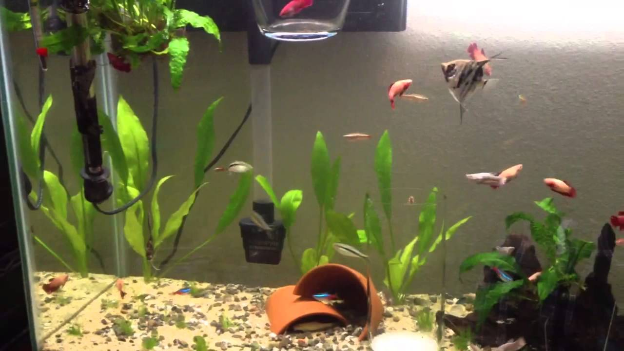 Community female betta tank youtube for Betta fish friends