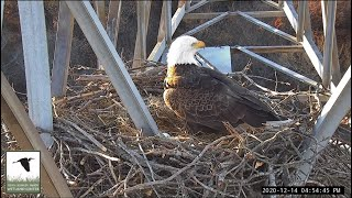Preview of stream Eagle Tower Camera