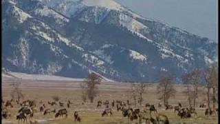 Montana Hunters Help Track Brucellosis