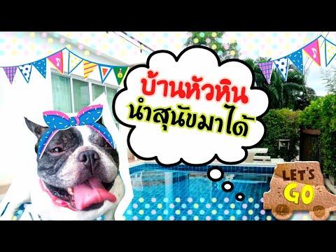 ที่พักหัวหินสุนัขพักได้ huahin 0856623487