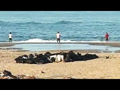 Citizens' voice: Why Chennai beaches demand action