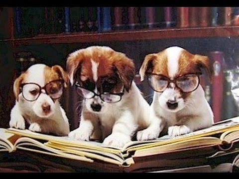 Teach your dog to read - Tricks to teach your dog