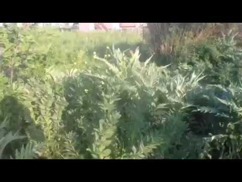 Herbs in Home Garden in Turkey