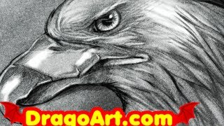 How to Draw an Eagle, Sketching an Eagle Head, Step by Step