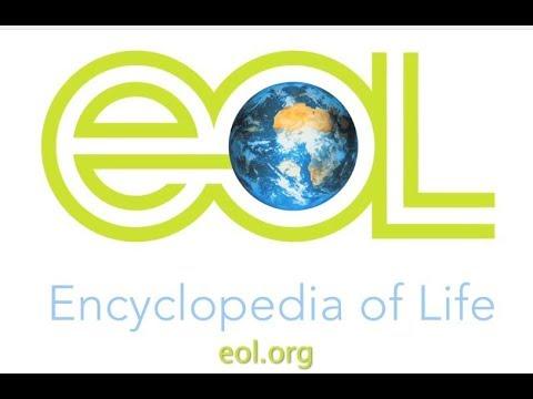 Encyclopedia of Life on TALK BUSINESS 360