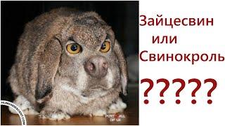 Эти странные животные действительно существуют!
