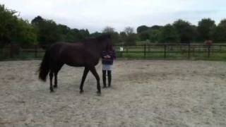 Jodie & Bouncer - Close Range Liberty Circling at Trot