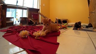 40 Minutes of Cute Foster Kittens Playing - Candid Action Camera Video