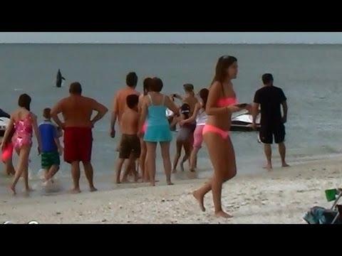 Dolphins jumping at Bonita Beach in Bonita Springs