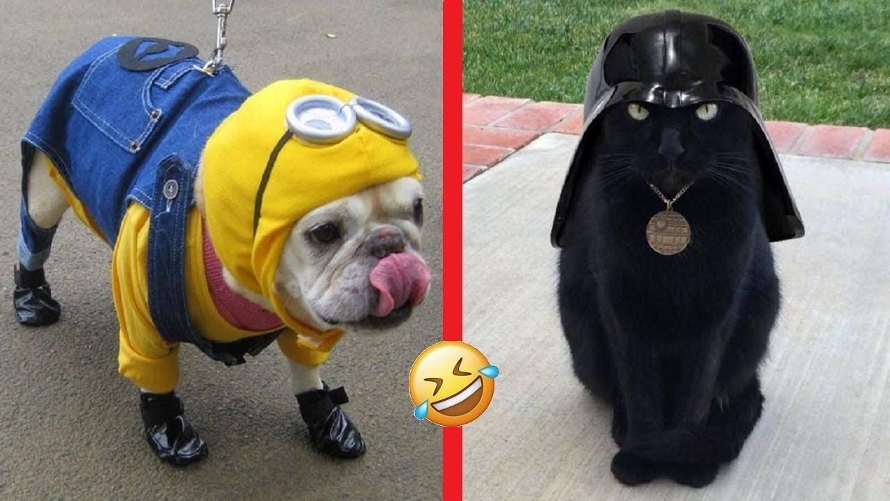 funny and creative halloween costumes for pets