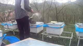 Arılara kek ve şurup verme