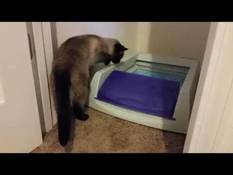Automatic Cat Litter Box Set Up and Use!!