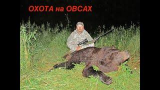 Охота на Медведя с лабаза. Охота в Кировской области на овсах.