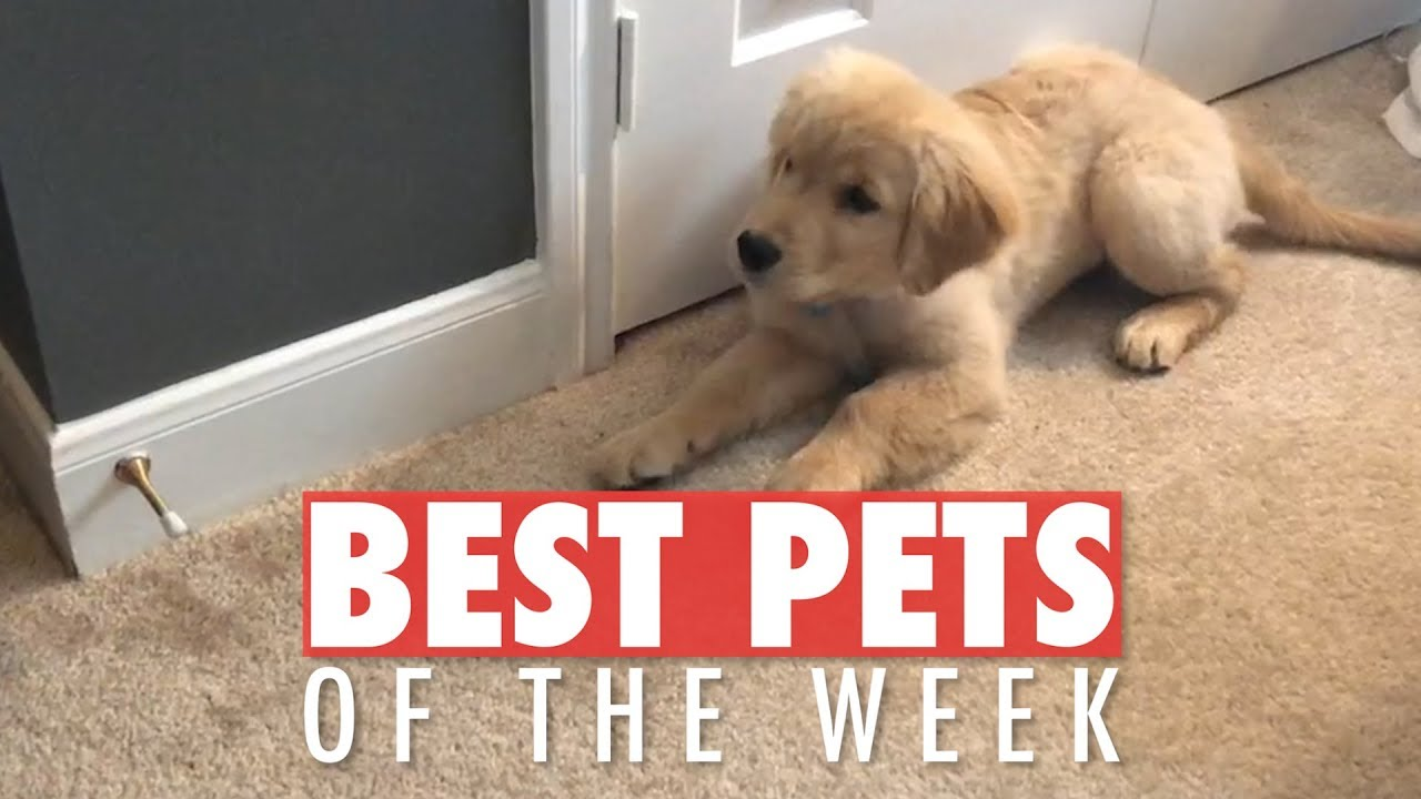 The Best Pet Videos of the Week