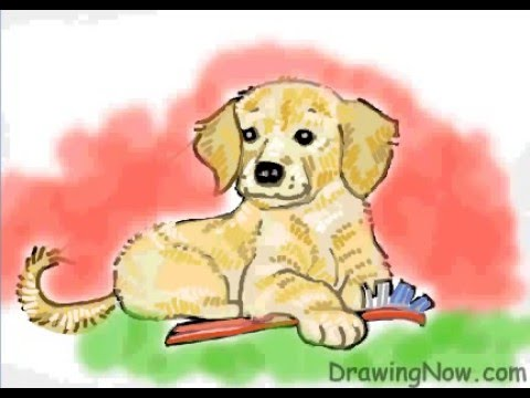 how to draw a golden retriever puppy youtube