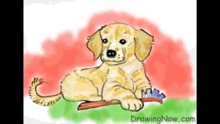 How to Draw a Golden Retriever Puppy