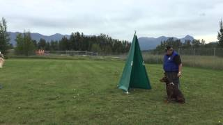Doberman Pinscher Training In Schutzhund/ipo