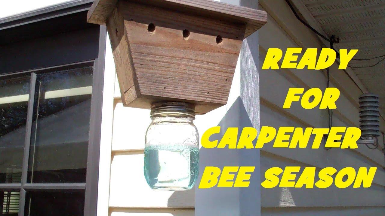 Carpenter bee trap diy sweepstakes