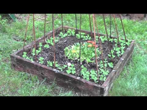 Garden, Hoop House and Chantecler Chicks