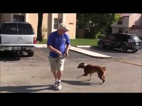 How to teach your dog to walk nicely on a leash in just 1 class!