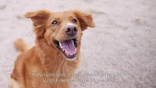 Hypokoirayhdistyksen video 2 yhteistyössä Agrian kanssa