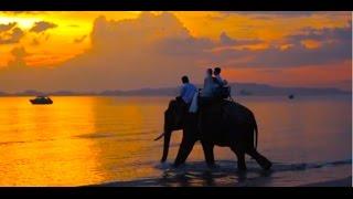 свадьба в Краби, свадьба на слоне