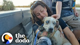 Dog Stranded On Island Melts Into Her Rescuer's Arms | The Dodo Adopt Me!