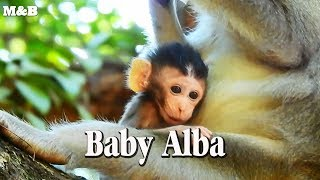 Baby Alba is handsome and obey mummy well today