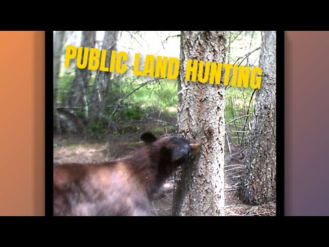 Washington Deer Hunt, 2019 Pt. 1