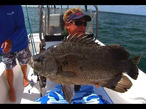 Tripletail Fishing The Buoy Line Off St Augustine Florida