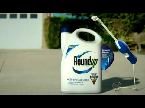 Judge says Roundup weed killer can be labeled with cancer warning
