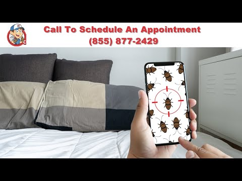 Colorado Springs Bed Bug Exterminator | Colorado Springs Bed Bug Removal | Bed Bug Pest Control
