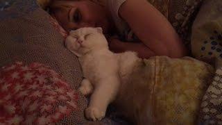 Кот сладко спит