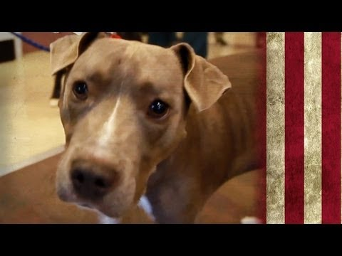 The Jail Dogs of Gwinnett County | American Dog With Victoria Stilwell